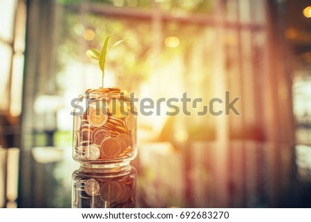 Plant growing out of coins with filter effect retro vintage style,concept money growing and small tree in jar, economy concept
