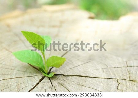 plant growing through trunk of...