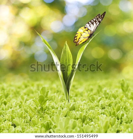 plant growing with green grass...