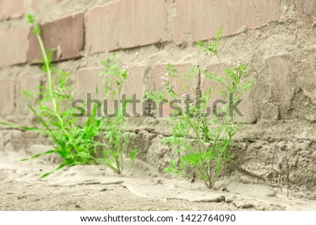 plant grows from concrete breaks through the asphalt #1422764090