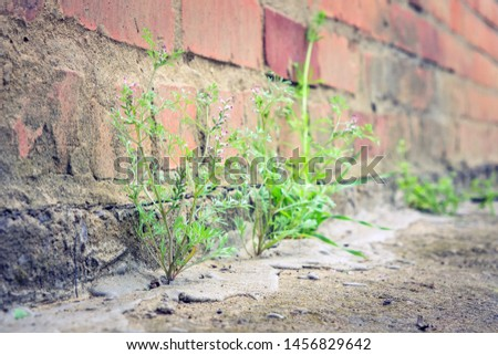 plant grows from concrete breaks through the asphalt #1456829642