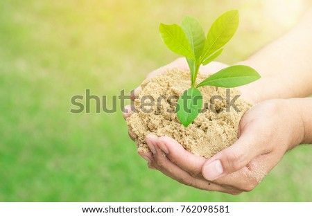 plant grows on soil and hands of men.  #762098581