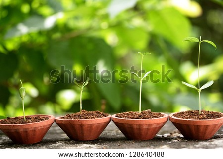Plant growth-Baby plants - stock photo