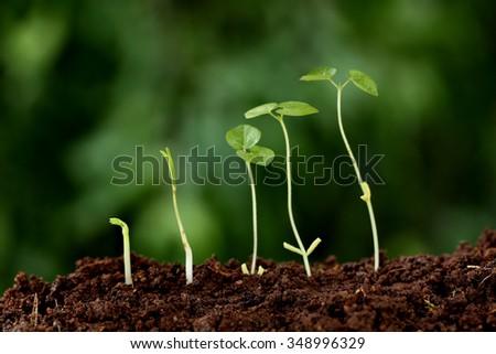Plant growth-New beginnings - Shutterstock ID 348996329