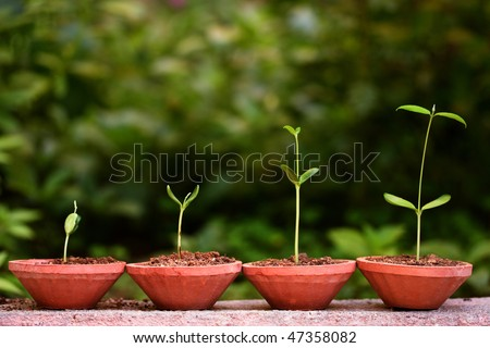 Plant growth-Stages of growing plants - stock photo