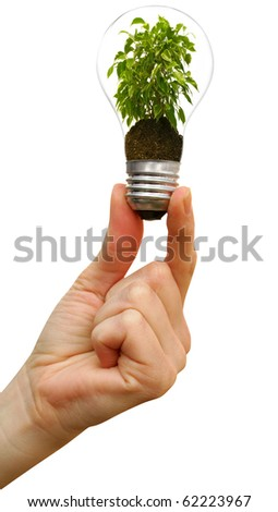 plant in a bulb in a hand on a white background