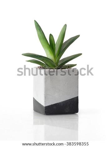 Plant in a concrete painted cubic pot #383598355