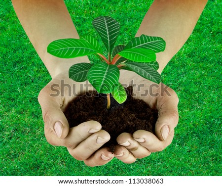 Plant in a hand isolated on the grass background