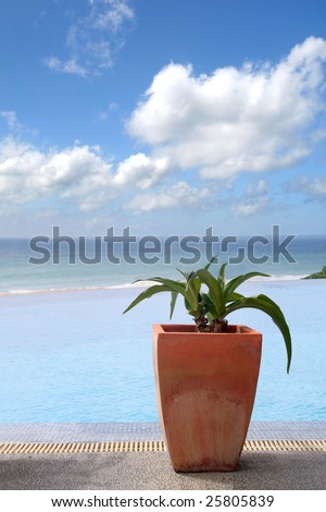 Plant in clay pot near pool and sea