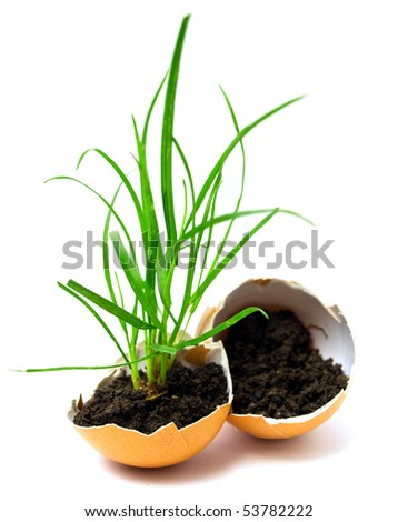 plant in egg