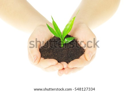 plant in female hands isolated...