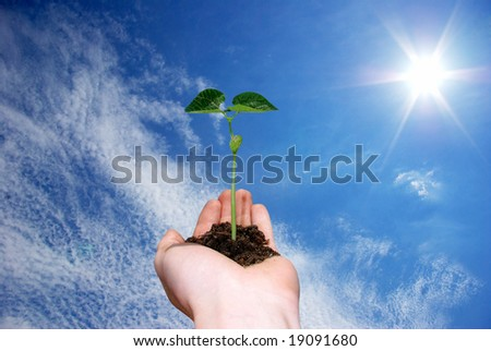 plant in  hand on sky