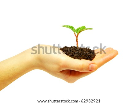 plant in hand on white