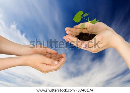 Plant in hands on a background of the sky with clouds