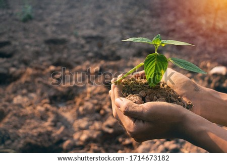 Plant in hands.Young man carrying plant and planted a plant in to the soil on land back ground.field,land,hope,Global warming.Photo concept save world and ecology.  Stockfoto ©