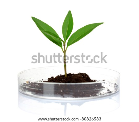 plant in laboratory isolated on white