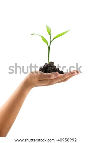 plant in man hand isolated on white