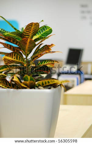 plant in office with computer monitor background
