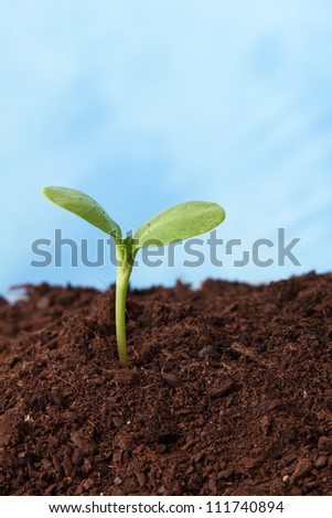 plant in soil growing sky as background