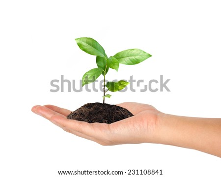 plant in the hand on white background #231108841