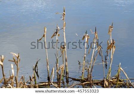 Plant in the lake. #457553323