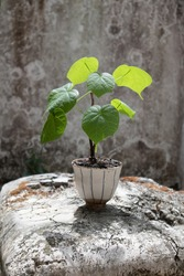 plant in the pot on congrete
