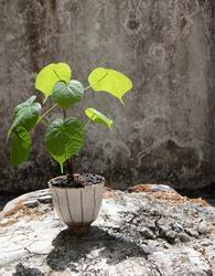 plant in  the poton  grey congrete