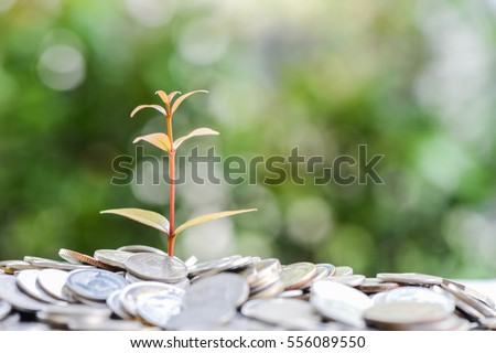 Plant is growing from saving money for saving money concept #556089550