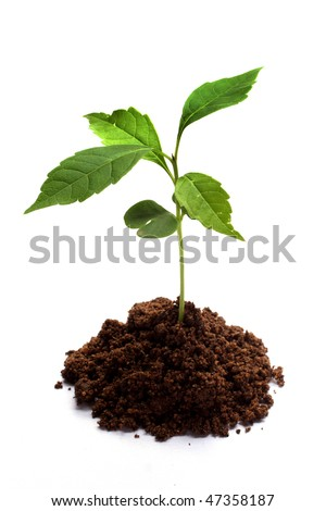 Plant isolated on white - stock photo