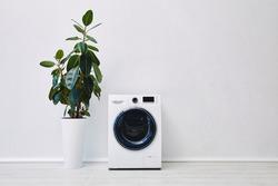 plant near modern washing machine in bathroom