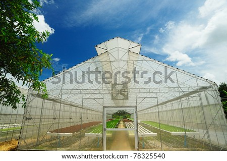 Plant nursery of organic vegetable