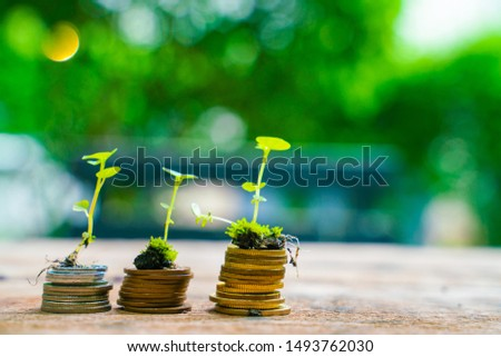 Plant on coin business growth concept, Finance concept