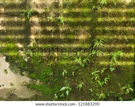 plant on old wall and sunlight