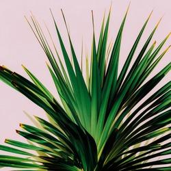 Plant on pink. Minimal art. Tropical fashion mood