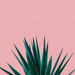 Plant on pink.  Tropical Greens  minimal art design