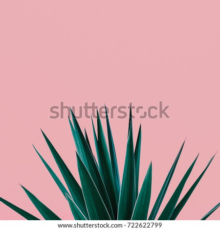 Plant on pink.  Tropical Greens  minimal art design #722622799