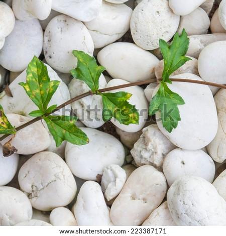 plant on rock ground