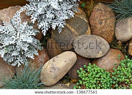 Plant on rock stone