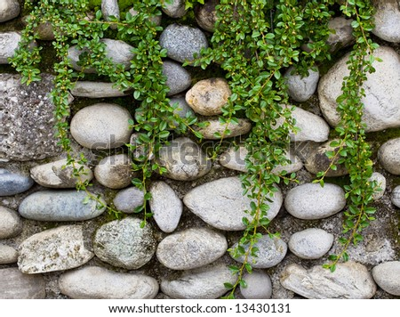 Plant on rock stone wall