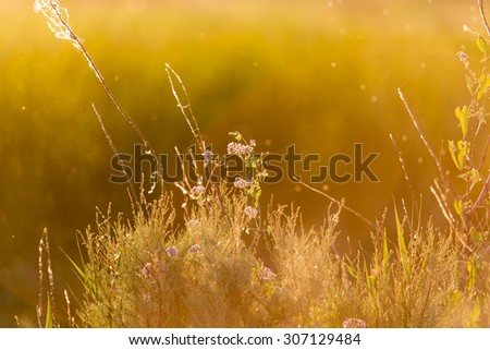 plant on the background of sunset #307129484