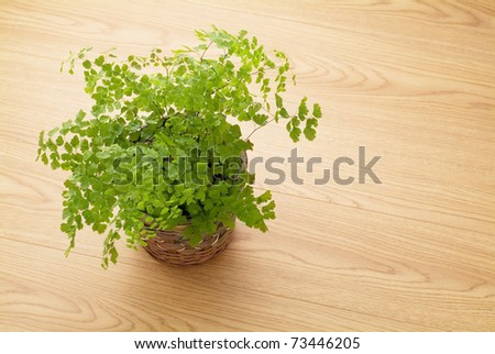 plant on the floor