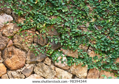plant on the rock wall