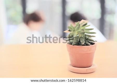 Plant on wood