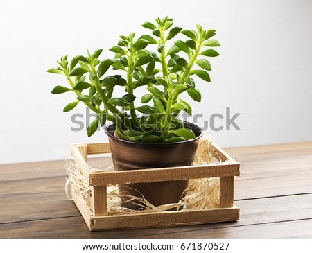 Plant on wooden table. Decor. #671870527