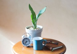 plant pot of Sansevieria or snake plant, alarm clock, blue coffee mug, notebook and eye glasses on wooden table with morning sunlight,morning routine, gardening concept.