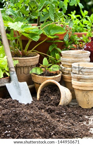 Plant pots with vegetables and herbs/planting/plant pots