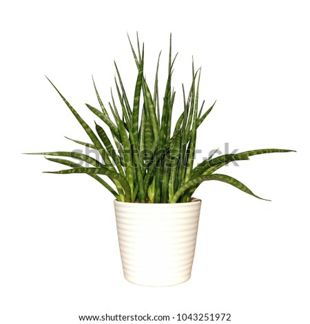 Plant potted plant isolated on white background. Office or home green plant #1043251972