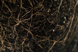 Plant roots in ground texture. Agriculture concept