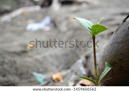 Plant sapling plant growth  mini plant