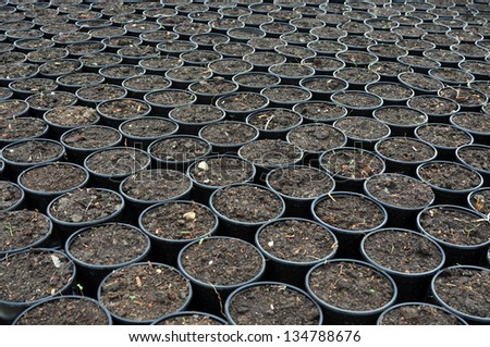 plant seed in greenhouse flowerpot school laboratory experiment